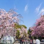 2013年3月~上野・秋葉原散策~