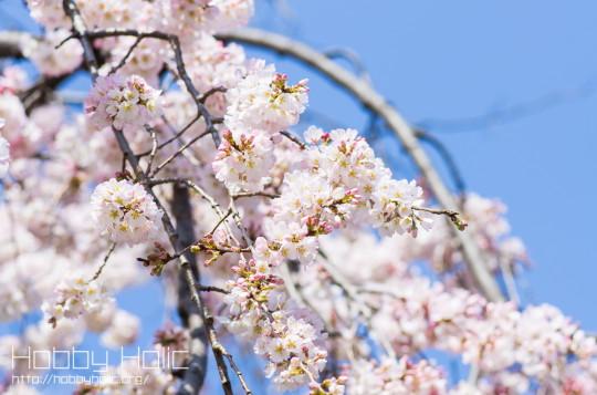 2013_0316_ueno_akihabara_10