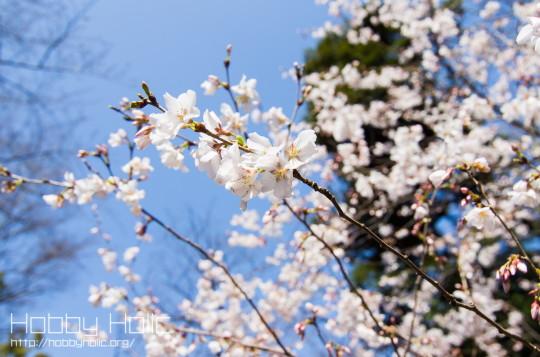 2013_0316_ueno_akihabara_12