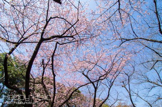 2013_0316_ueno_akihabara_14