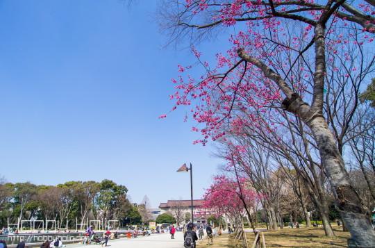2013_0316_ueno_akihabara_23