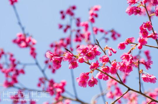 2013_0316_ueno_akihabara_25